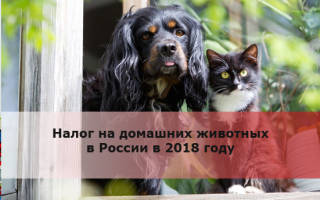Налог на домашних животных в России 2018